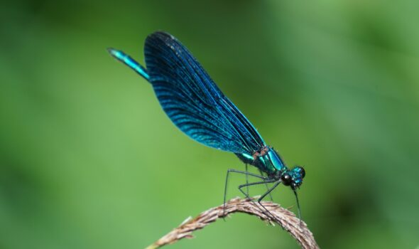 Dragon fly | photography, images, and art for hotels, office buildings, homes, restaurants, hospitals, and shopping malls